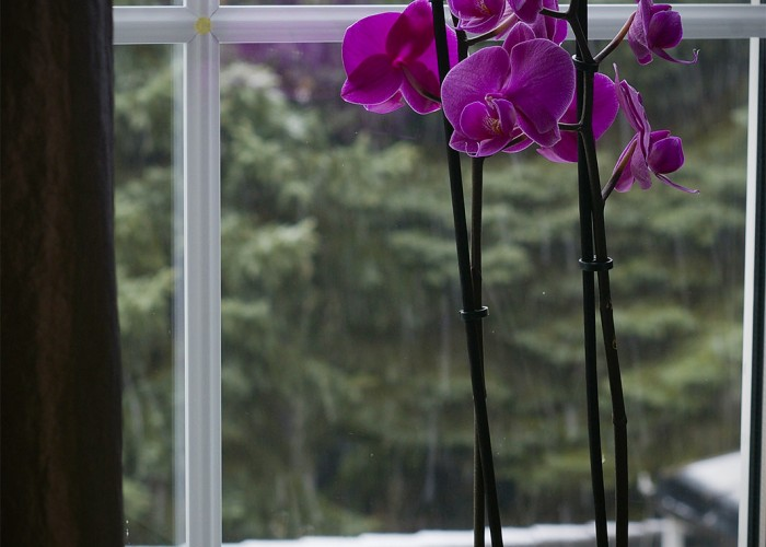 Téli hangulat, lila orchidea
