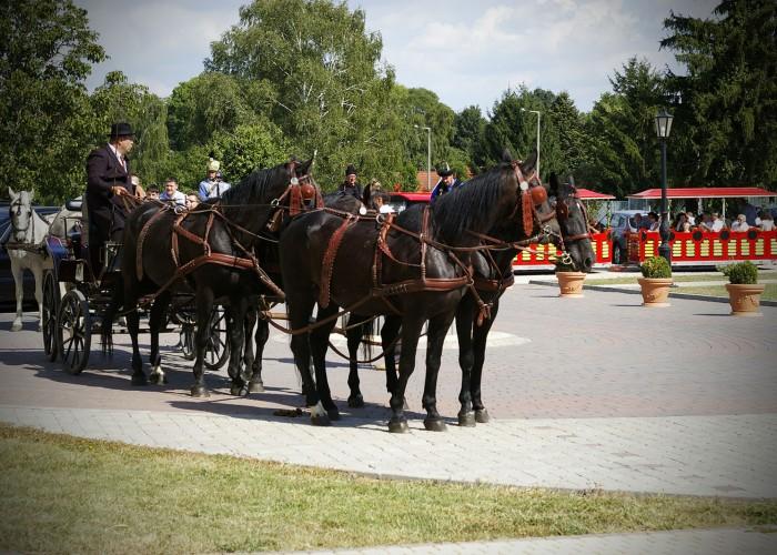 Harkány szüreti fesztivál - lovaskocsi