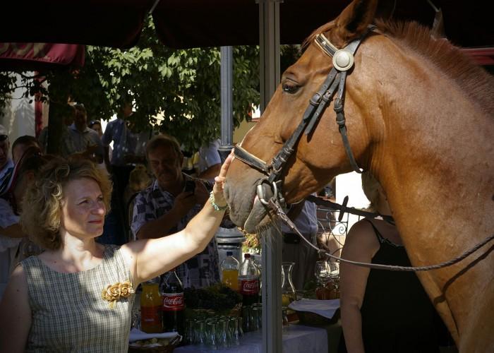 Harkány szüreti fesztivál - ló simogatása