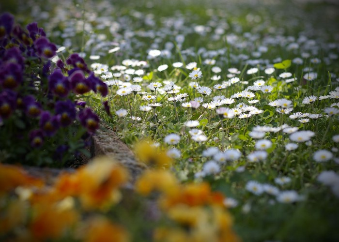 Tavaszi hangulat virágok