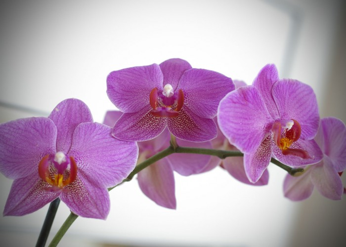 Tavaszi hangulat - Orchideák