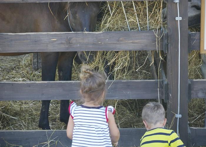 Ős-Dráva Látogatóközpont, lovakat etető gyermekek