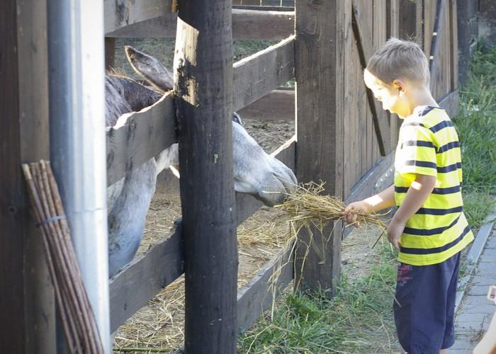 Ős-Dráva Látogatóközpont, szamarat etető gyermek