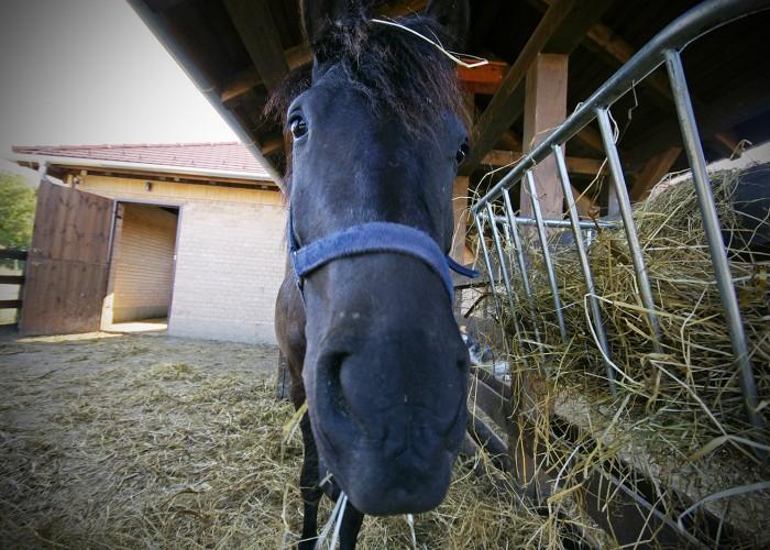 Ős-Dráva Látogatóközpont, ló