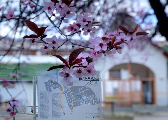 A Harkányi Gyógy- és Strandfürdő bejárata tavaszi virágzás idején