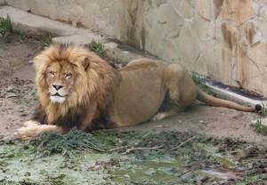 állatkert-hl20-720x500