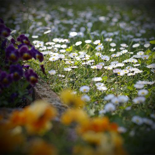 Tavaszi ébredés csomagajánlat, virágok